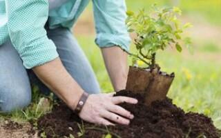 Barrio San Carlos: convocan a vecinos a participar de una campaña de reforestación