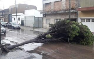 San Justo: cayó un árbol y quedó atravesado en una calle