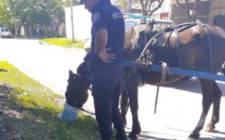 Isidro Casanova: rescataron a un caballo que era maltratado