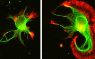 Científicos argentinos lograron un importante avance en el campo de las proteínas
