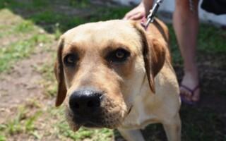 Alumnos de la UNLaM crearon una plataforma que conecta paseadores de perros con los dueños de las mascotas