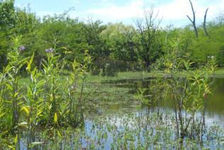 Nuevo encuentro virtual de la mesa de trabajo que busca preservar la Reserva Natural de Ciudad Evita