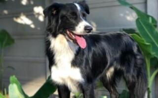 Buscan a una mascota de Ituzaingó por La Matanza